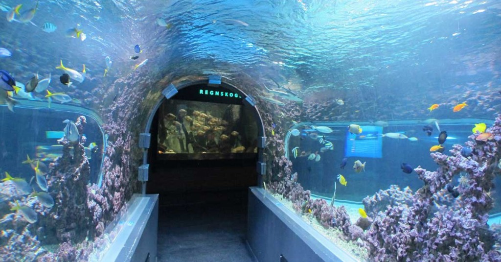 akvarium bergen