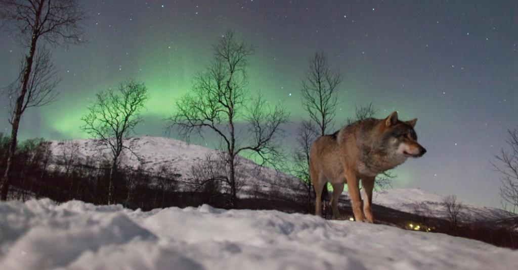 polar-park